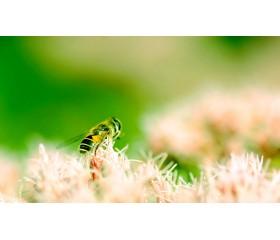 Picaduras por insectos, animales marinos o arácnidos: ¿Qué hacer?